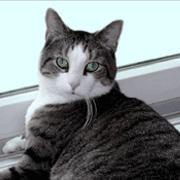 Биологи сконструировали белки против аллергии на кошек