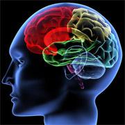 Недоразвитость мозга способствует шизофрении