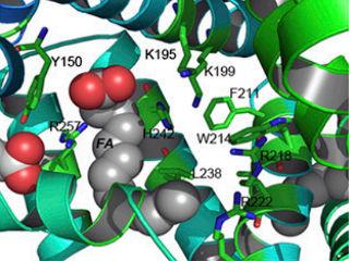 Генетики получили человеческий альбумин из риса