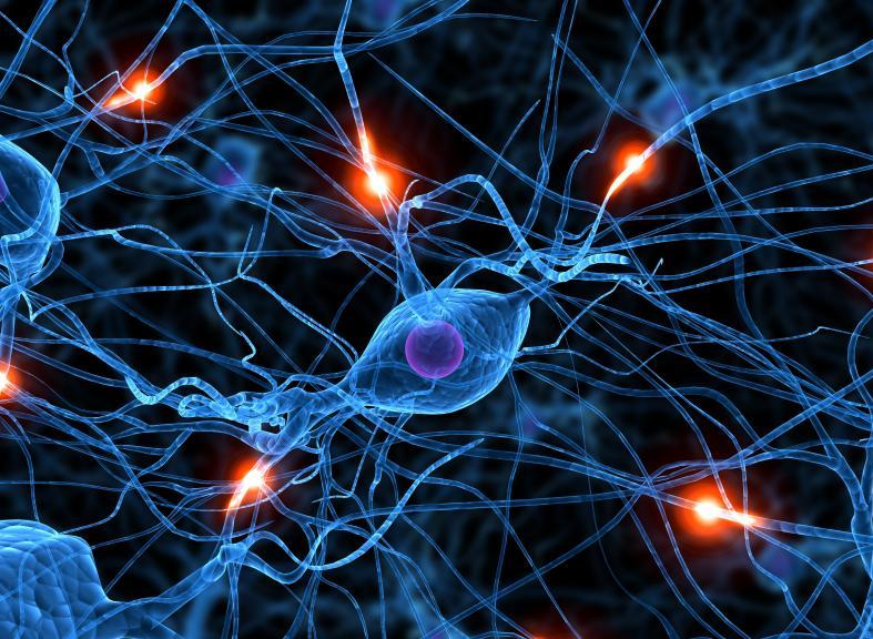 Обнаружен белок, который позволяет восстановить периферические нервы