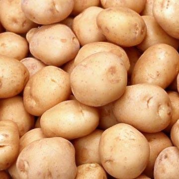Картошка предотвращает появление в желудке вредоносных бактерий